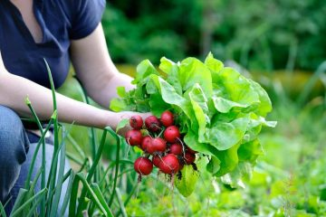 Get Ready For a Spring Vegetable Garden Harvest With These Tips
