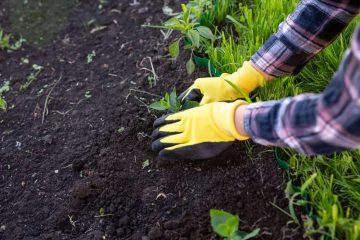 Debunked: The Most Common Gardening Myths