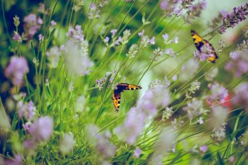5 Insects That Are Great for Your Garden